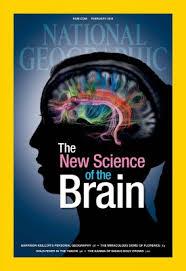 NG Brain 2
